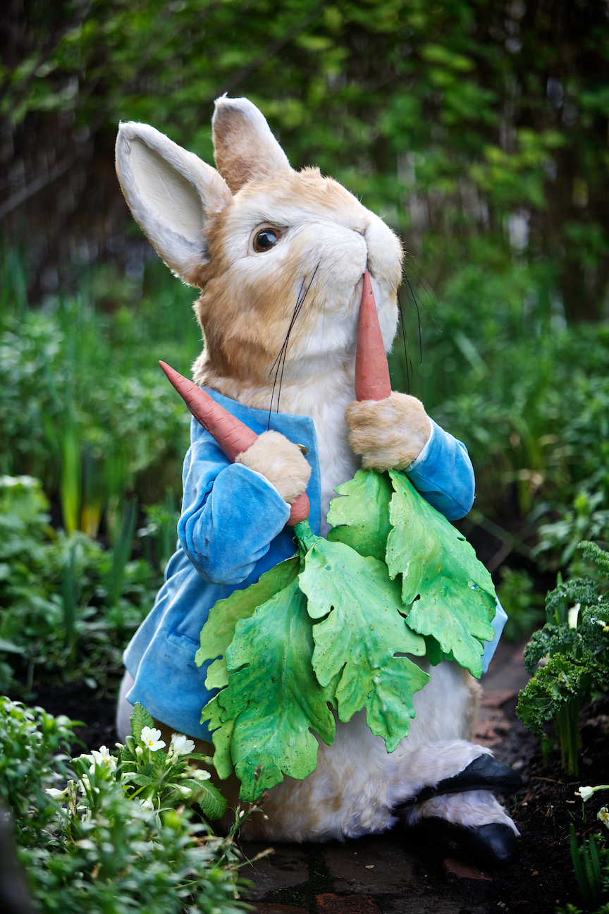 The Loveable Peter Rabbit © www.stevenbarber.com